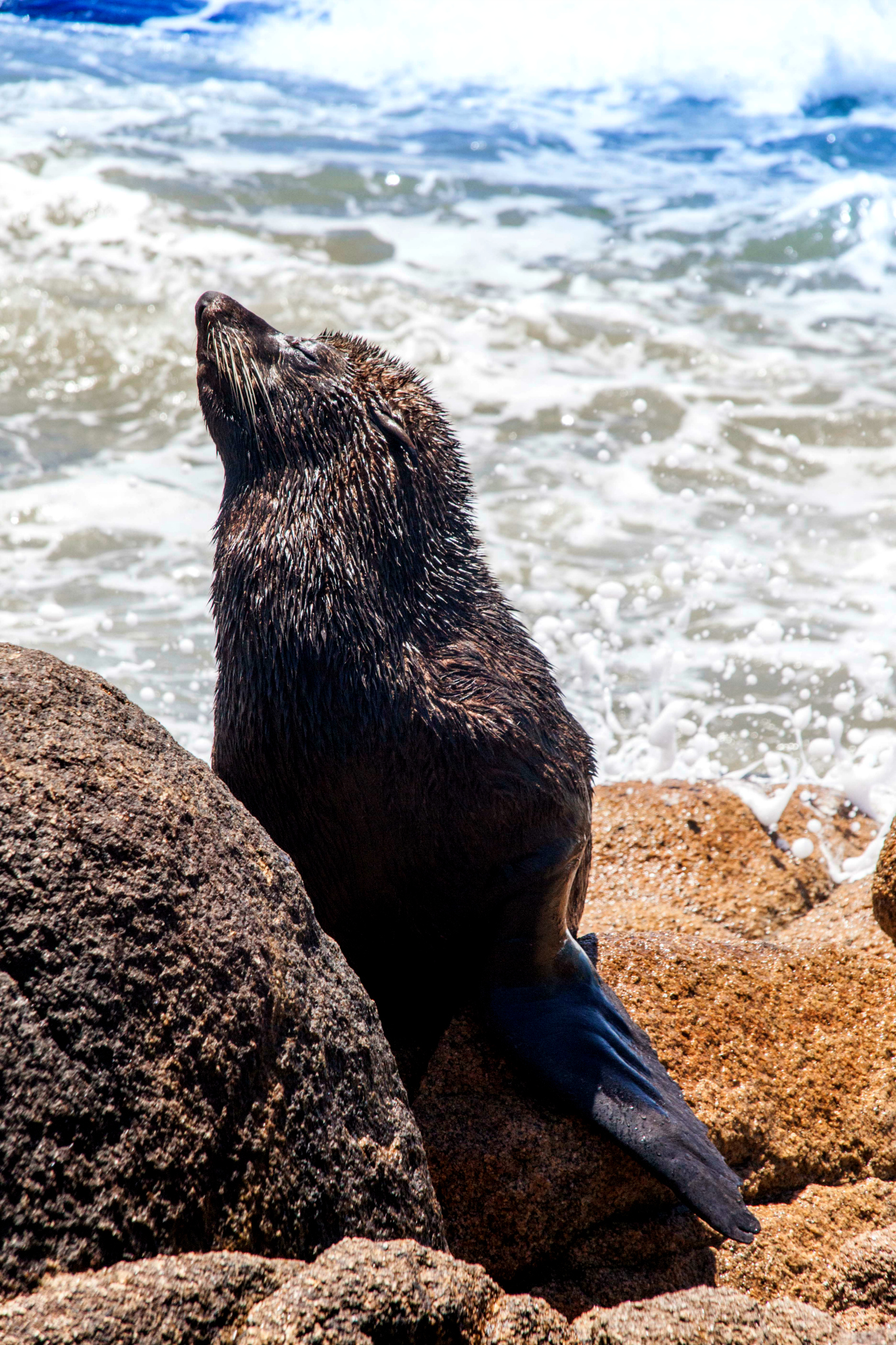 This is an usual image in Cabo Polonio. Photo by Francois