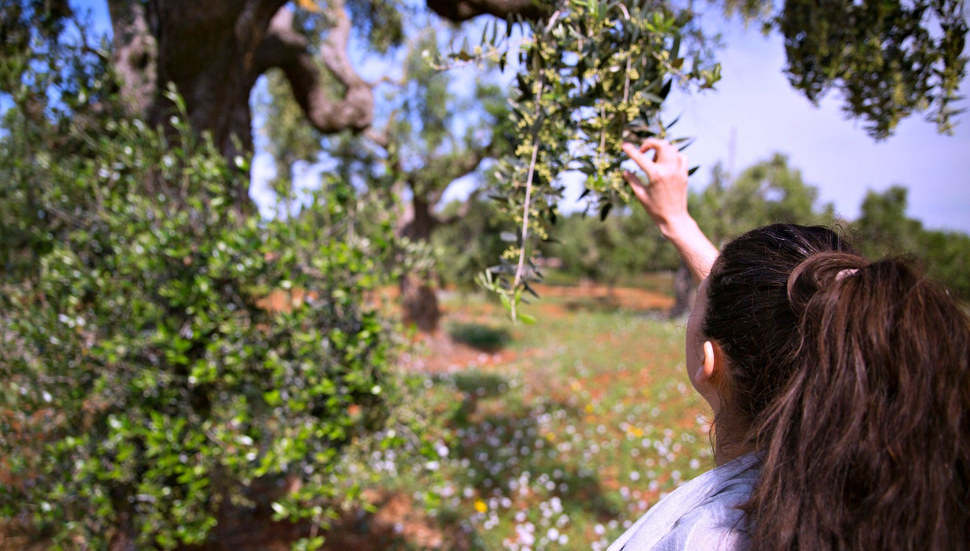 In Don Piedro's olive trees garden. Photo by Francois