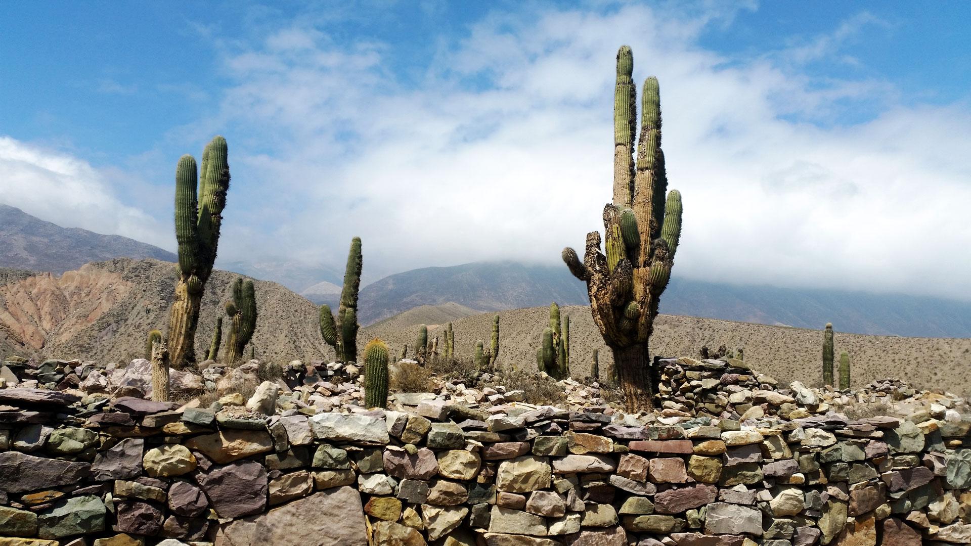 Old, big cactus are everywhere around. Photo by Ovidiu Balaj
