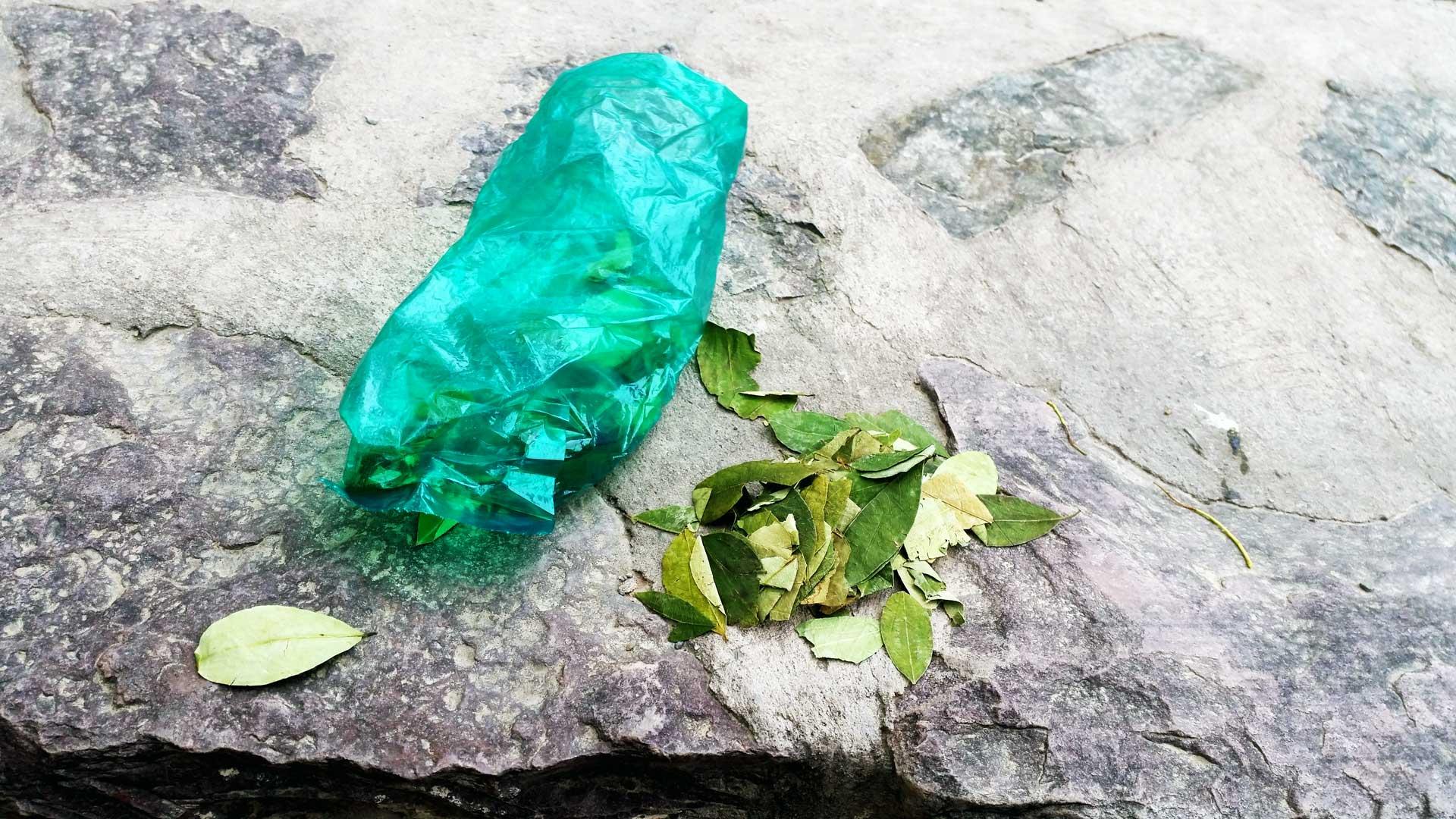 The coca leaves. Photo by Ovidiu Balaj