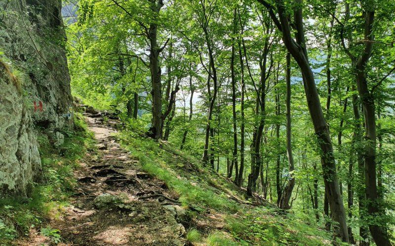 Avem parte și de umbra din pădure pe traseu.